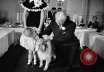 Image of a collie Chicago Illinois USA, 1957, second 11 stock footage video 65675069546