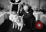 Image of a collie Chicago Illinois USA, 1957, second 12 stock footage video 65675069546