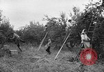 Image of apple picking Washington State United States USA, 1957, second 4 stock footage video 65675069671