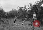 Image of apple picking Washington State United States USA, 1957, second 5 stock footage video 65675069671