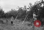 Image of apple picking Washington State United States USA, 1957, second 6 stock footage video 65675069671