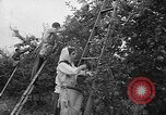 Image of apple picking Washington State United States USA, 1957, second 7 stock footage video 65675069671