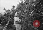 Image of apple picking Washington State United States USA, 1957, second 9 stock footage video 65675069671