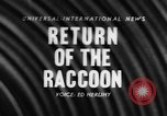 Image of raccoon coats United States USA, 1957, second 1 stock footage video 65675069673