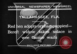 Image of red hen and puppies Tallahassee Florida USA, 1932, second 1 stock footage video 65675069705