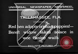 Image of red hen and puppies Tallahassee Florida USA, 1932, second 3 stock footage video 65675069705