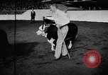 Image of Live-Stock show Chicago Illinois USA, 1957, second 4 stock footage video 65675069758