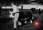 Image of Live-Stock show Chicago Illinois USA, 1957, second 6 stock footage video 65675069758