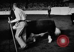 Image of Live-Stock show Chicago Illinois USA, 1957, second 7 stock footage video 65675069758