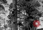 Image of Lumberjacks scaling tall trees Taiwan, 1950, second 2 stock footage video 65675069926