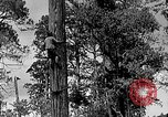 Image of Lumberjacks scaling tall trees Taiwan, 1950, second 3 stock footage video 65675069926