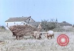 Image of army camp Corsica France, 1944, second 10 stock footage video 65675070020