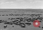 Image of herds of horses Soviet Union, 1942, second 10 stock footage video 65675070119