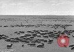 Image of herds of horses Soviet Union, 1942, second 11 stock footage video 65675070119