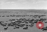 Image of herds of horses Soviet Union, 1942, second 12 stock footage video 65675070119