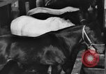 Image of horses Soviet Union, 1942, second 10 stock footage video 65675070120