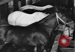 Image of horses Soviet Union, 1942, second 11 stock footage video 65675070120