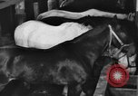 Image of horses Soviet Union, 1942, second 12 stock footage video 65675070120