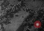 Image of Soviet ballistic missiles Cuba, 1962, second 3 stock footage video 65675070164