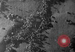 Image of Soviet ballistic missiles Cuba, 1962, second 7 stock footage video 65675070164