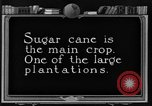 Image of sugarcane farm Hawaii USA, 1924, second 1 stock footage video 65675070223