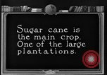 Image of sugarcane farm Hawaii USA, 1924, second 5 stock footage video 65675070223
