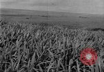 Image of sugarcane farm Hawaii USA, 1924, second 12 stock footage video 65675070223