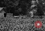 Image of tractor-drawn wagon United States USA, 1919, second 3 stock footage video 65675070231