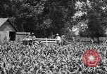 Image of tractor-drawn wagon United States USA, 1919, second 5 stock footage video 65675070231