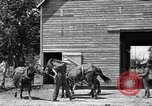 Image of horse-drawn binder United States USA, 1919, second 5 stock footage video 65675070233
