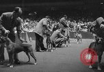 Image of dog show New York United States USA, 1952, second 10 stock footage video 65675070426