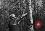 Image of tent caterpillar Ontario Canada, 1937, second 12 stock footage video 65675070579