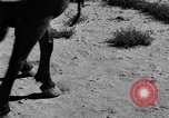 Image of Great Plains United States USA, 1936, second 6 stock footage video 65675070602