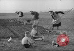Image of grow vegetables Germany, 1946, second 11 stock footage video 65675070619