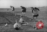 Image of grow vegetables Germany, 1946, second 12 stock footage video 65675070619