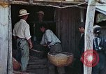 Image of rehabilitation of natives Okinawa Ryukyu Islands, 1945, second 1 stock footage video 65675070758