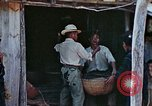 Image of rehabilitation of natives Okinawa Ryukyu Islands, 1945, second 9 stock footage video 65675070758