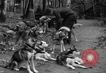 Image of sled dogs Wonalancet New Hampshire USA, 1939, second 10 stock footage video 65675070946