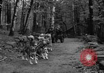Image of sled dogs Wonalancet New Hampshire USA, 1939, second 13 stock footage video 65675070946