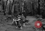 Image of sled dogs Wonalancet New Hampshire USA, 1939, second 14 stock footage video 65675070946