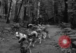 Image of sled dogs Wonalancet New Hampshire USA, 1939, second 15 stock footage video 65675070946