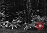 Image of sled dogs Wonalancet New Hampshire USA, 1939, second 32 stock footage video 65675070946