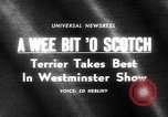 Image of Westminster Kennel Club dog show New York United States USA, 1965, second 2 stock footage video 65675070999