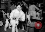 Image of Westminster Kennel Club dog show New York United States USA, 1965, second 7 stock footage video 65675070999