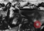 Image of collective farms Ukraine, 1943, second 6 stock footage video 65675071391