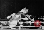 Image of Boxing cats West Orange New Jersey USA, 1894, second 2 stock footage video 65675071490
