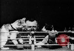 Image of Boxing cats West Orange New Jersey USA, 1894, second 3 stock footage video 65675071490