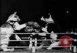 Image of Boxing cats West Orange New Jersey USA, 1894, second 5 stock footage video 65675071490