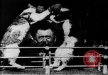 Image of Boxing cats West Orange New Jersey USA, 1894, second 9 stock footage video 65675071490