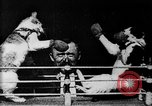 Image of Boxing cats West Orange New Jersey USA, 1894, second 10 stock footage video 65675071490